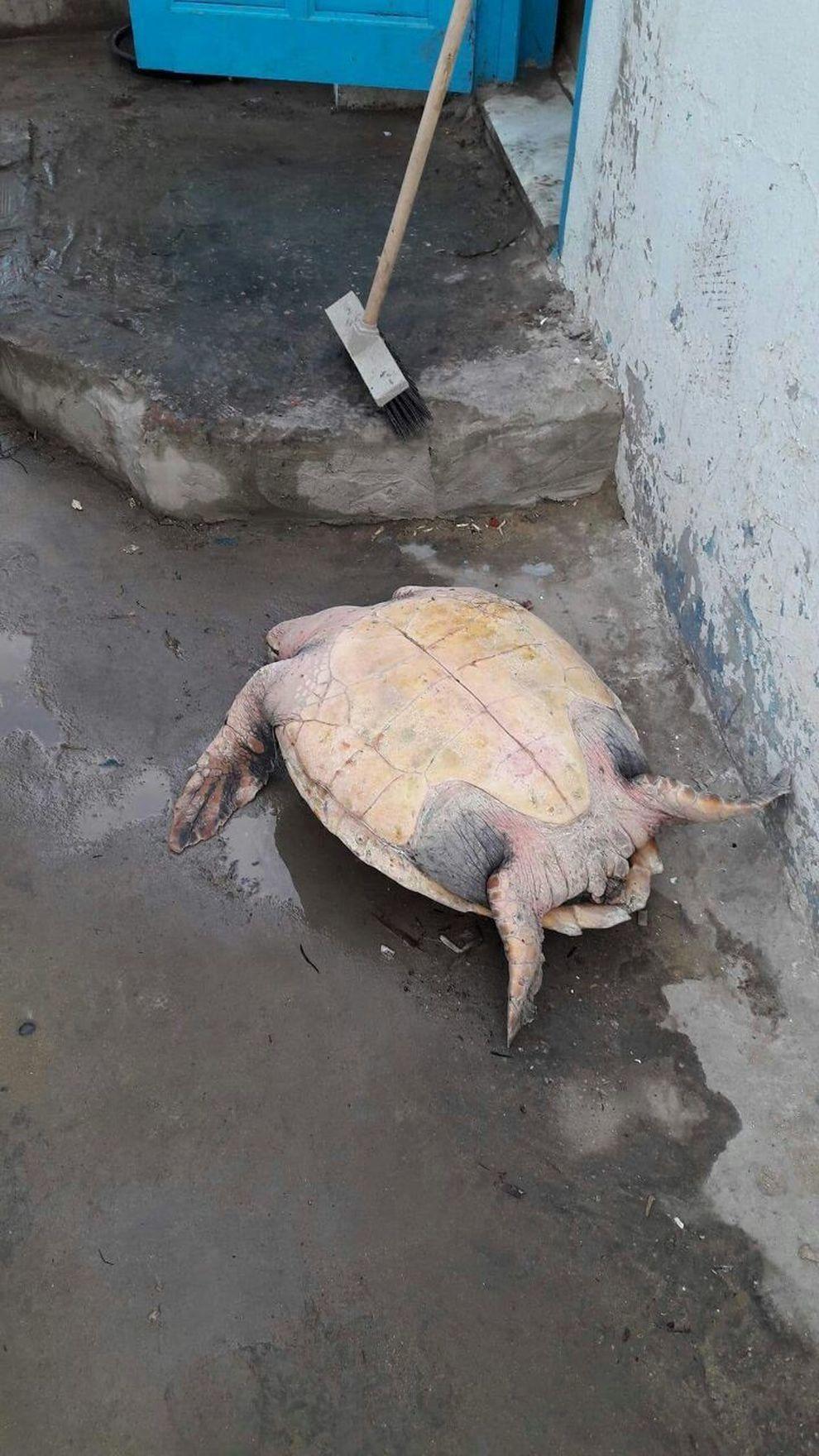 Risultati immagini per tartaruga si lascia morire