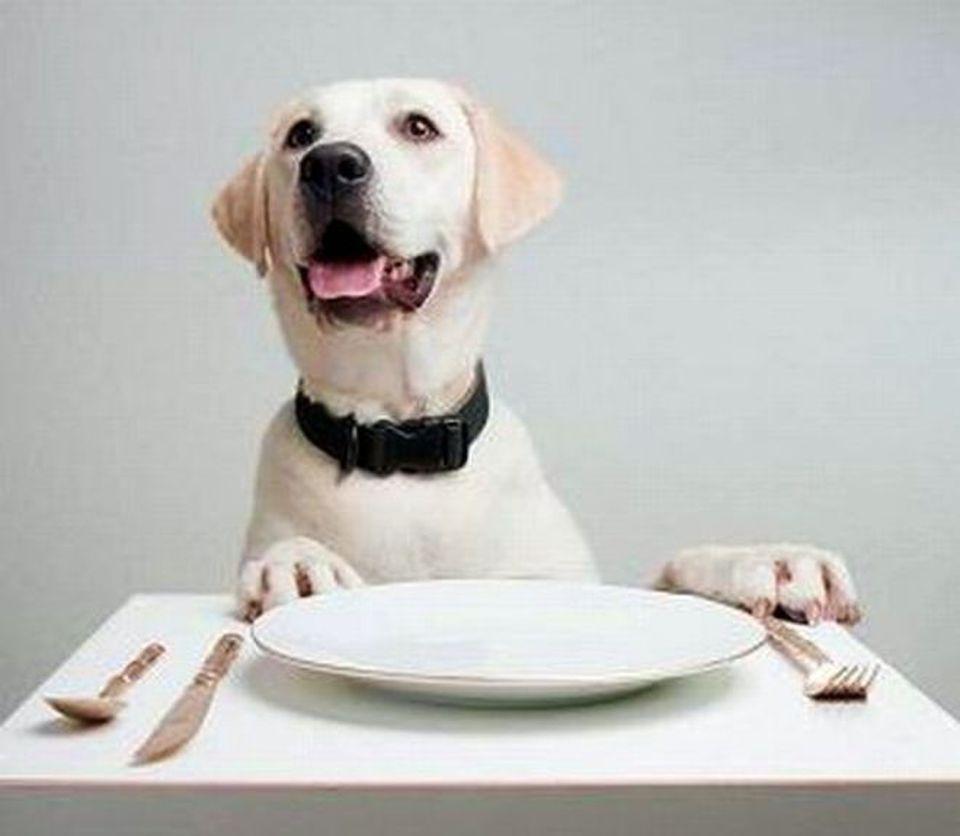 Dieci Cibi Che Fanno Male Ai Vostri Cani Ecco Tutti Gli Alimenti Da