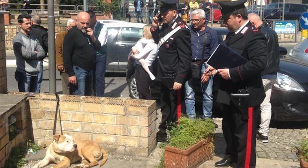 Pitbull azzanna il cagnolino di una bambina, momenti di panico a Priverno
