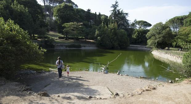 Villa ada allarme laghetto acqua sparita pesci e for Pesci da laghetto mangia zanzare