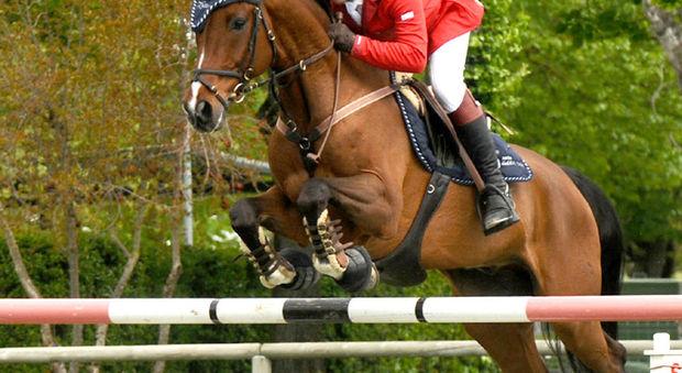 Tredicenne cade e il cavallo la calpesta, è in condizioni gravissime