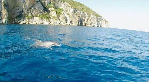 Bagno coi delfini tra ponza e ventotene le immagini fanno il giro del web italia - Bagno coi delfini roma ...