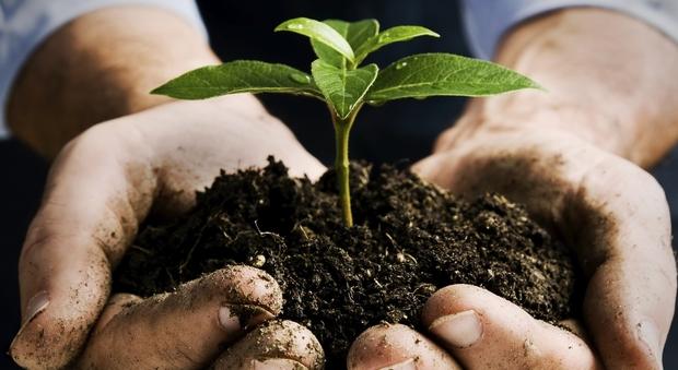 L 39 agricoltura bio diventa doc in arrivo la prima legge di for Settore della camera