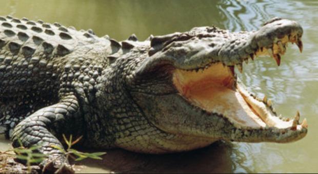 Coccodrillo uccide una mamma davanti ai suoi figli