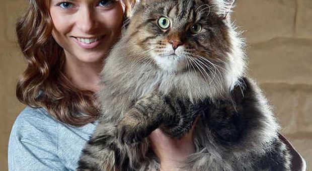 Gatti giganti ecco i felini pi grandi del mondo for I piu fighi del mondo
