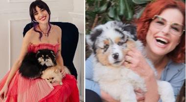 """Arriva """"Pet Carpet: un riciclo da Oscar"""", riuso e riciclo di accessori per animali"""