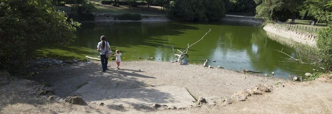 Villa ada allarme laghetto acqua sparita pesci e for Laghetto pesci rossi e tartarughe