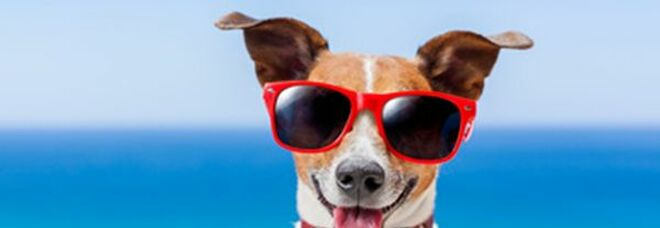 """Osservatorio Findomestic, effetto """"estate"""" sui consumi: meno casa, più vacanze"""