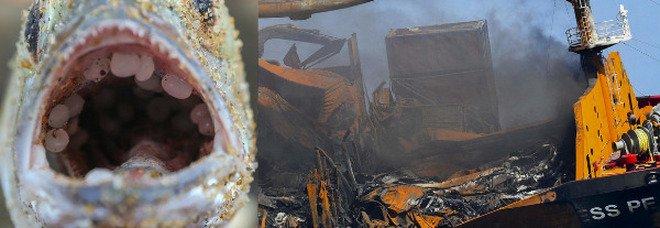 Disastro ambientale: affonda il cargo dei veleni con tonnellate di prodotti chimici