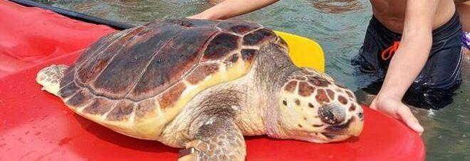 Tartaruga caretta caretta trovata morta in spiaggia a Ostia: la profonda ferita sul carapace