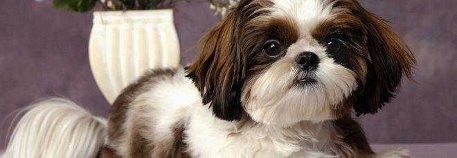Cane ucciso e sepolto con la sua padrona: «Lei voleva così». Ma era ancora sanissimo