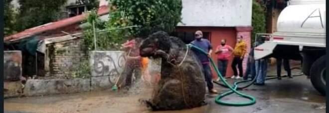 Ratto gigante sbuca dalle fogne dopo il temporale: la foto è virale, la verità degli operai