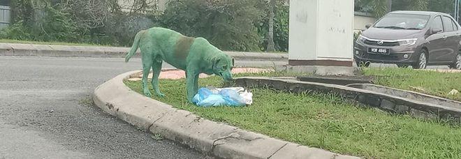 Colorano il cane con la vernice verde, le immagini choc fanno il giro del mondo