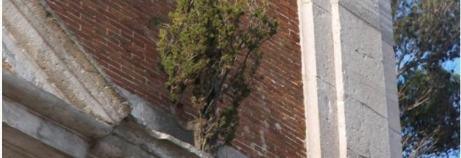 Il mistero del cipresso cresciuto senza terra sul marmo della Basilica in provincia di Latina. GUARDA LE FOTO