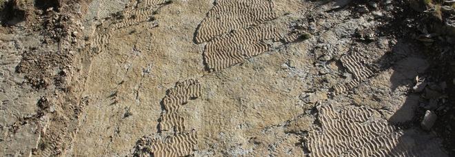 Grandi rettili preistorici, impronte trovate sulle Alpi: risalgono a 250 milioni di anni fa