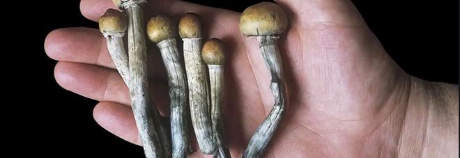 Funghi allucinogeni per curare la depressione? «Come il Prozac, ma con meno effetti collaterali»