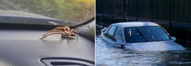 Trova un ragno nell'abitacolo, si lancia dall'auto in corsa e la fa finire nel fiume
