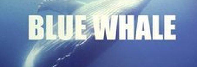 Risultati immagini per blue whale