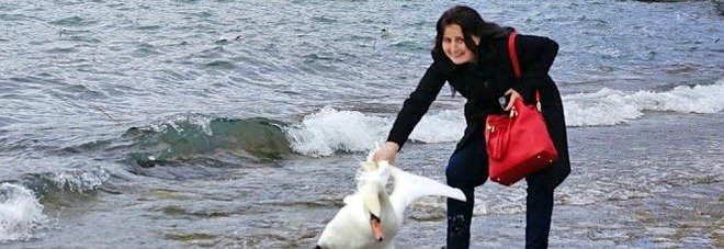 Vuole un selfie con il cigno a tutti i costi: lo tira con violenza e lo lascia morire in spiaggia