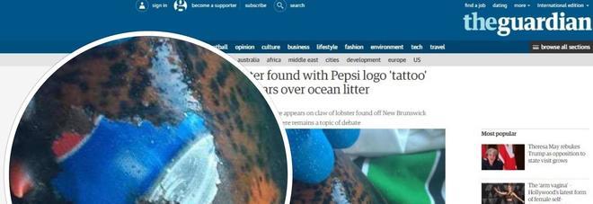 Aragosta con il logo Pepsi 'stampato' sulla chela: ecco la foto choc sull'inquinamento in mare