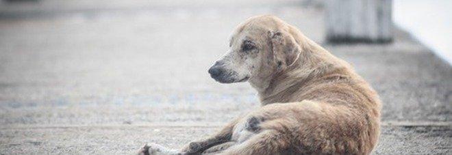 Lega il cane al furgone e lo trascina per le strade del paese fino a farlo morire