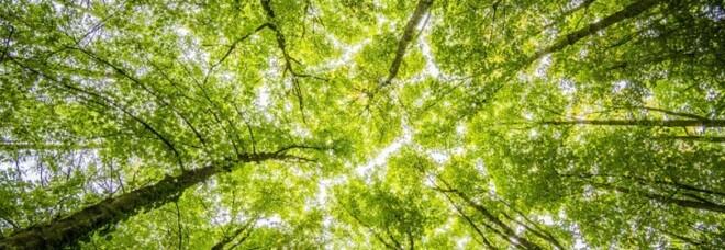 Un milione e mezzo di alberi piantati nel mondo: l'italiana Treedom festeggia il verde traguardo