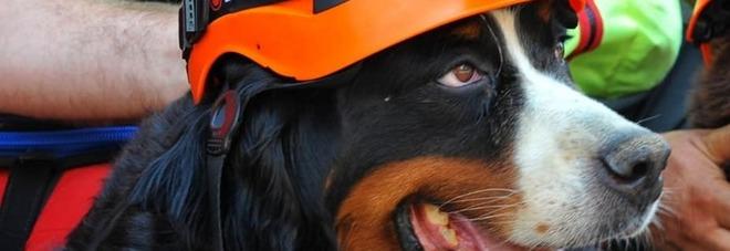 Kreole, il cane eroe di Amatrice è morta quattro anni dopo il terremoto
