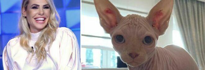 Ilary Blasi e Totti, il nuovo gatto: su Instagram le immagini dello Sphynx, ecco come si chiama