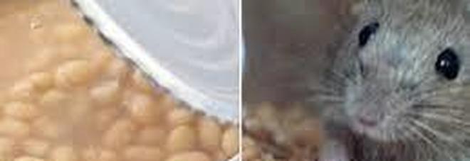 Topo morto nella scatola di fagioli, la sorpresa a tavola