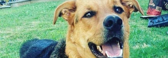 Il cane Margot morto di overdose: ha mangiato un panetto di droga in giardino
