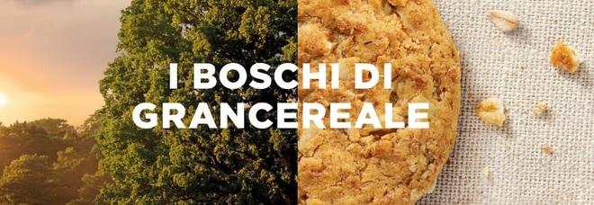 World Rainforest Day: Gran Cereale ripristina sei aree boschive italiane