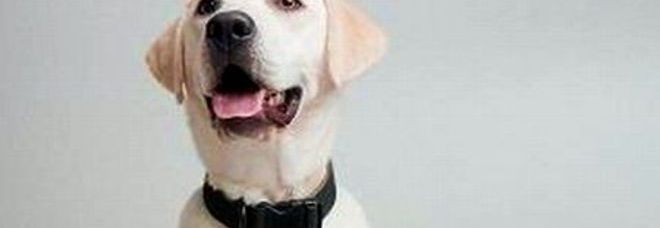 Dieci cibi che fanno male ai vostri cani ecco tutti gli alimenti da evitare leggi animali - Alimenti che fanno andare in bagno ...