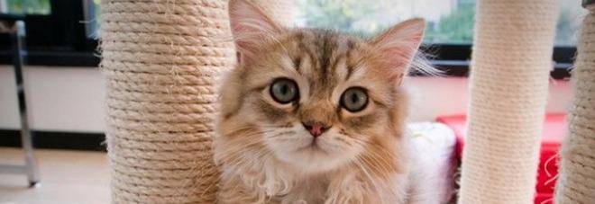 Due gatti vivono da soli in affitto in un appartamento da quasi 1500 euro al mese