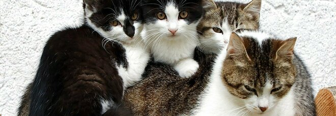 Il mistero del paese dove scompaiono i gatti: «Almeno 50 animali spariti in estate e mai più trovati»