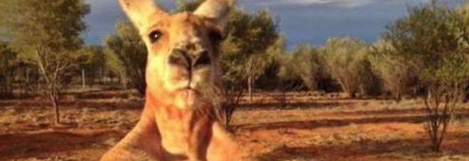 Morto roger il canguro palestrato alto due metri idolo for Alto pericolo il tuo account e stato attaccato