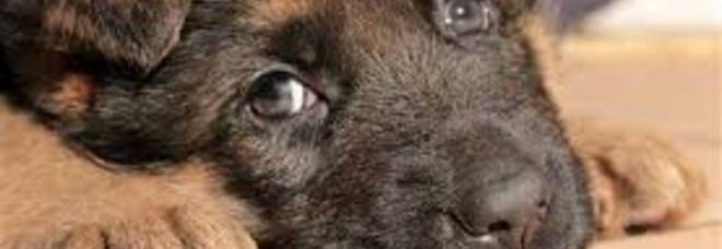 Gdv La Malattia Che Può Uccidere I Cani Ecco Chi Rischia Di Più