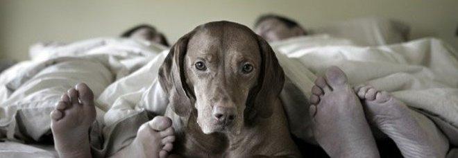 Il Cane Dorme Nel Letto Con Voi E Sbagliato Lo Dice Un