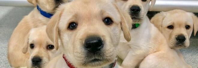 Gb, nuova legge e pugno di ferro contro i ladri di cani: rischieranno fino a 7 anni di carcere