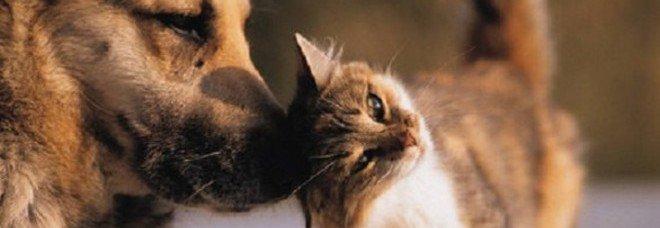 Cani e gatti malati? La visita dal veterinario diventa virtuale grazie a VetOnline24