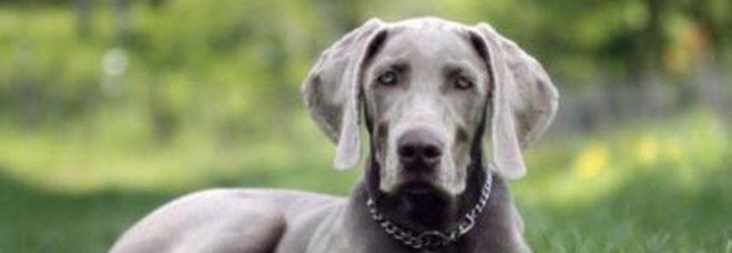 Scoppia un incendio in casa, il cane sveglia i padroni e li salva dalla tragedia