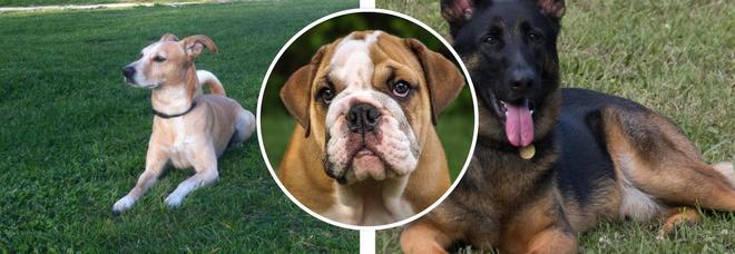Cani Il Falso Mito Dei Sette Anni Rispetto Alletà Delluomo Ecco