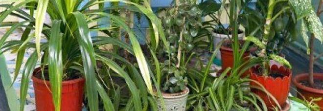 L 39 aria di casa pu essere inquinata ecco le 5 piante che la purificano casa - Piante che purificano l aria in casa ...