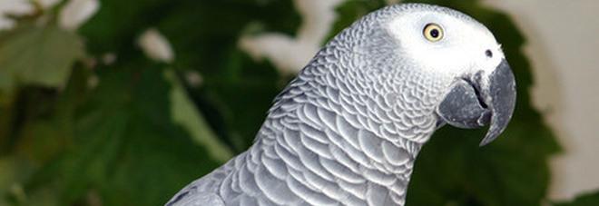 Pappagalli insultano i visitatori: rimossi dallo zoo dopo venti minuti di imprecazioni