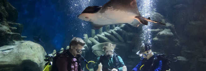 Cenare in un acquario con le mute da sub a tavola con for Comprare un acquario