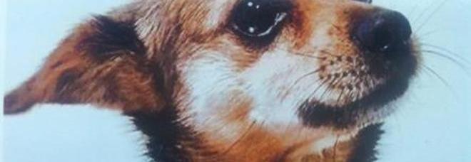 Il cane abbaia troppo aspettano che resti solo poi lo for Cane che abbaia
