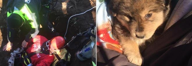 Cucciolo di cane cade nel pozzo: salvato dai vigili del fuoco
