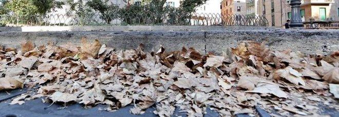 Giovane si spoglia in strada e fa sesso con le foglie, arrestato