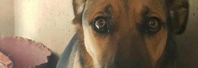 Cane muore folgorato da una luminaria di Natale caduta su una pozzanghera, padrone disperato: «Poteva capitare a bambino»