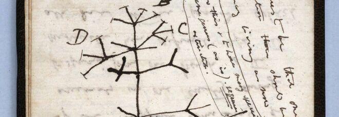 Charles Darwin, due taccuini rubati dalla biblioteca di Cambridge: il furto denunciato dopo 20 anni, ecco perché