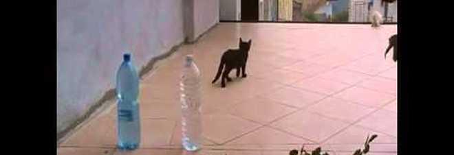 Una bottiglia d 39 acqua per allontanare i gatti dalle piante for Allontanare i gatti